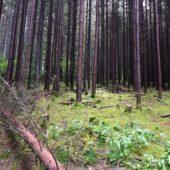 Lesnícky skanzen Vydrovo 2
