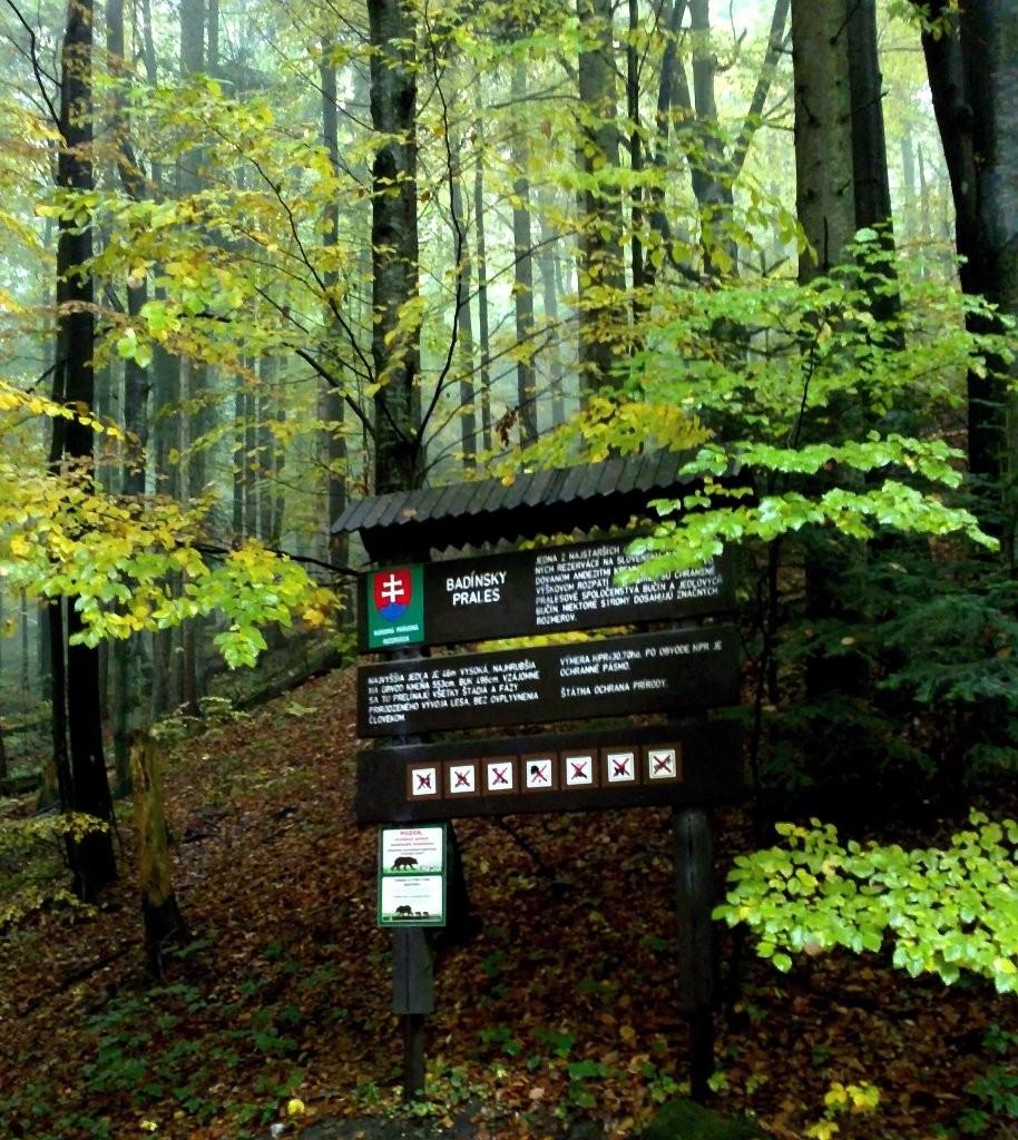 Badinský prales, Kremnické vrchy, Banskobystrický kraj, stredné Slovensko