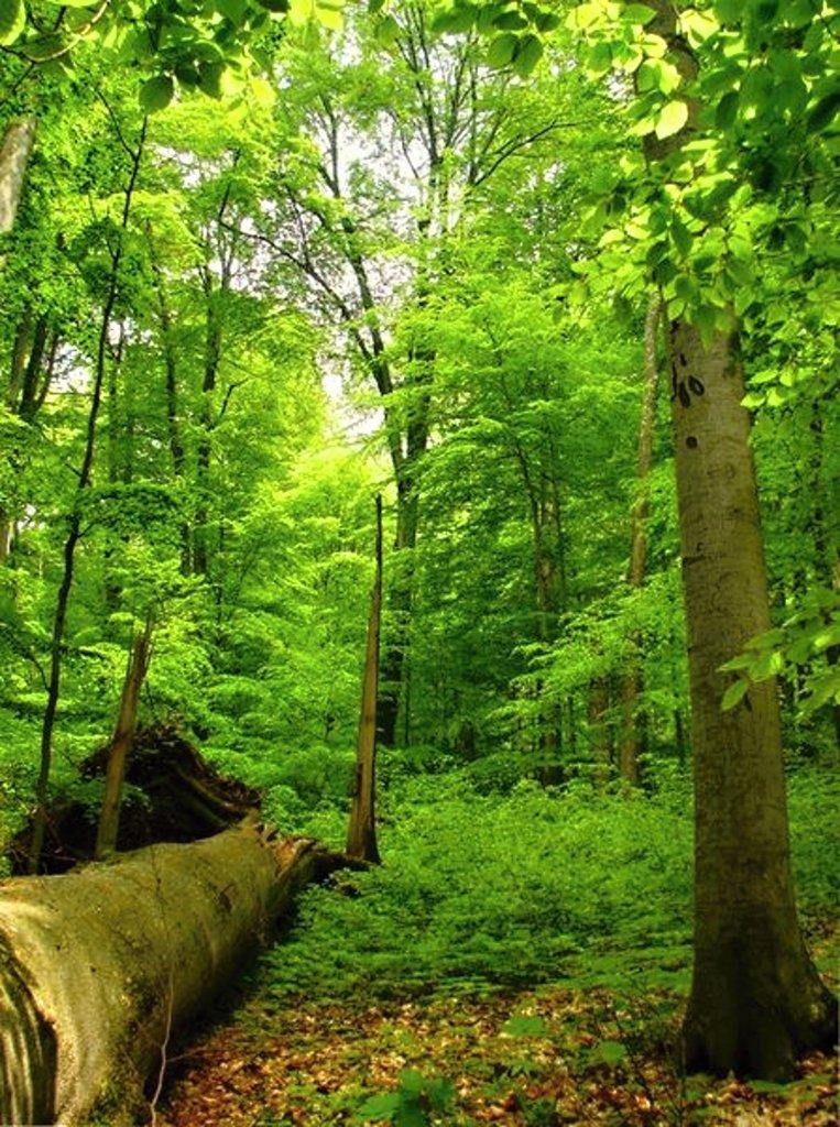 Prales Havešová (UNESCO), Národný park Poloniny, východné Slovensko