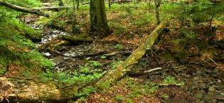 Prales Stužica, Národný park Poloniny, východné Slovensko