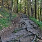 Tiesňava Veľký Sokol, Slovenský Raj Národný Park, Slovensko - 552