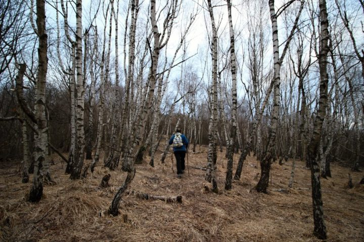 Nádherný brezový hájik pod Jelením vrchom, Hačava, kam na výlet Východné Slovensko
