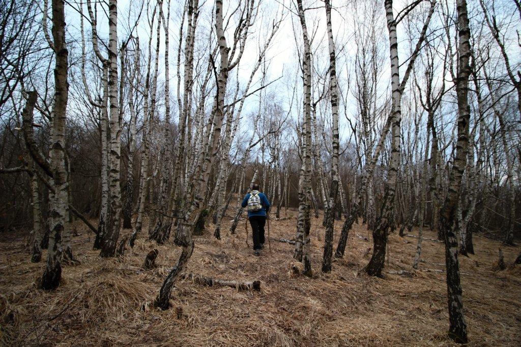 Nádherný brezový hájik pod Jelením vrchom, Hačava, Slovenský kras