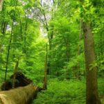 Bukový prales Havešová, Slovenské pamiatky UNESCO