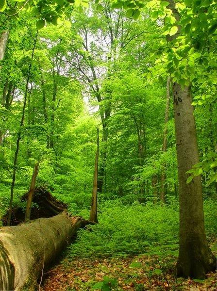 Bukový prales Havešová, Slovenské pamiatky UNESCO - Slovensko a jeho Prírodné pamiatky UNESCO