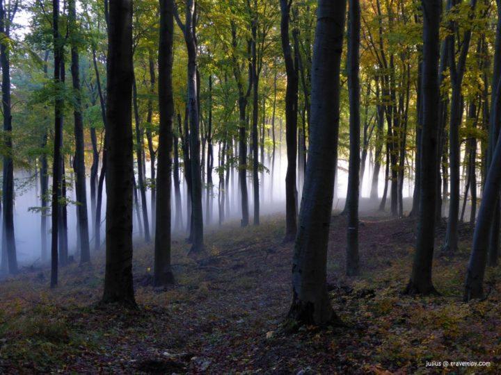 Bukový prales Rožok, Slovenské pamiatky UNESCO - Slovensko a jeho Prírodné pamiatky UNESCO