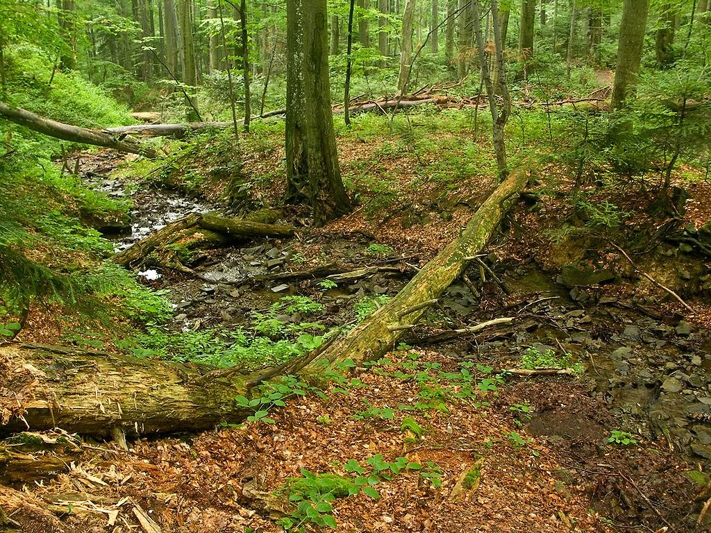 Bukový prales Stužica, Slovenské pamiatky UNESCO