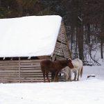 Koníky, Geravy, Slovenský raj, Košický kraj, Slovensko