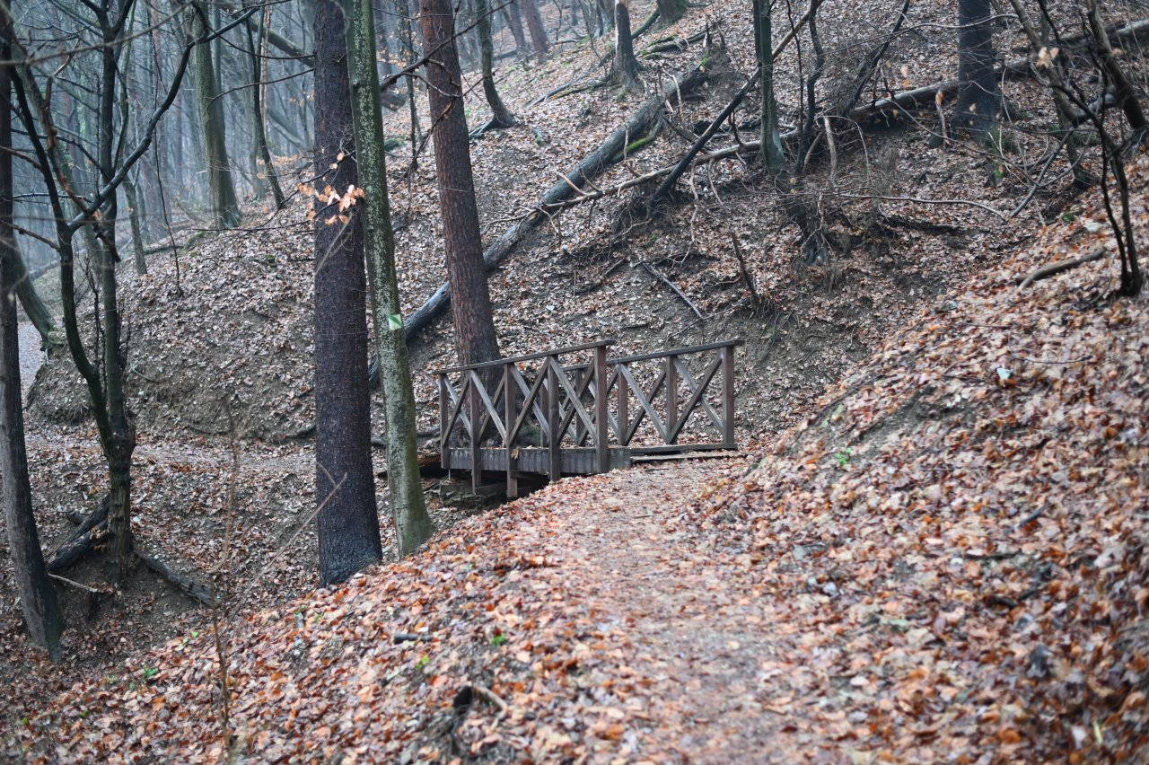 Čermeľský les, Košice