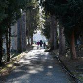 Cintorín Rozália, Košice - 1
