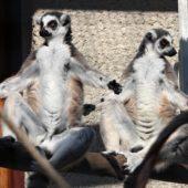 Zoo Košice, Kam do mesta Košice