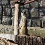 Zoo Košice, Kam do mesta Košice 3