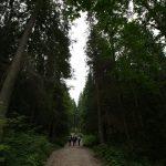 Cesta lesom k Dobšinskej ľadovej jaskyni, Ľadový expres