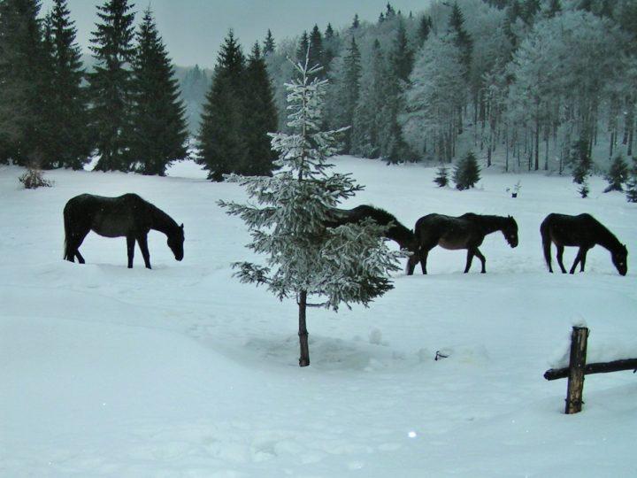 Koníky na Geravách v zime, Ľadový expres