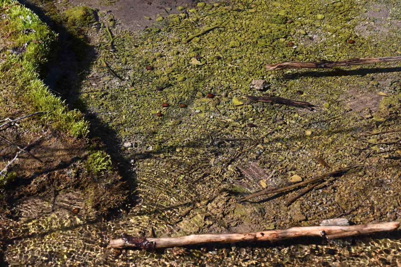 Priezračná čistá voda v Penovcových jazierkach, Slovenský kras