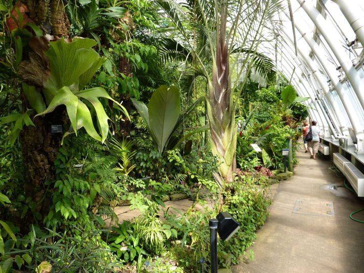 Tropický sklenník Fata Morgana, Botanická záhrada, Praha
