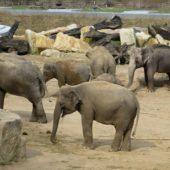 Údolie slonov, Zoo Praha