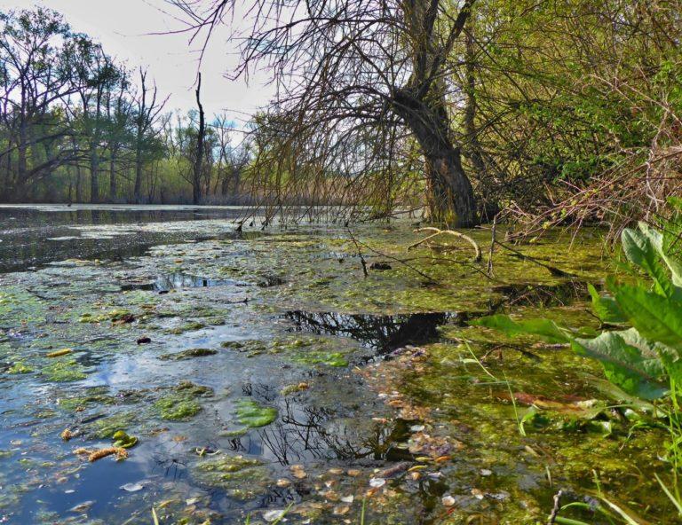 Močiar pri jazere Geča