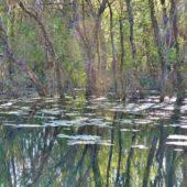 Močiar pri jazere Geča 2