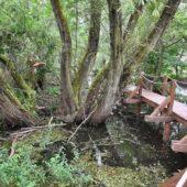 Oborín - Vodná zážitková cesta, CHKO Latorica - 9